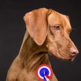 Chcesz wyszkolić psa? Z nami Twój pies stanie się pupilem miesiąca!